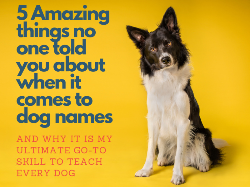 5 amazing things no one told you about when it comes to dog names and why it's my ultimate go-to