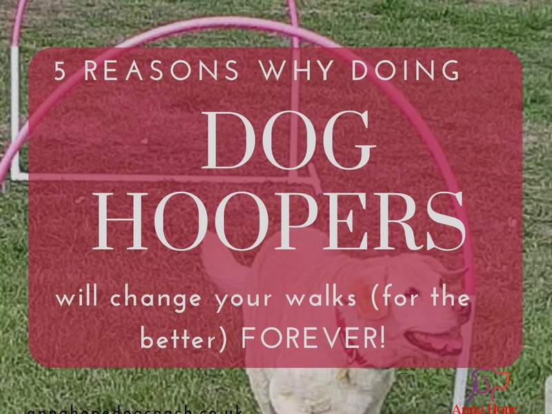 5 Reasons why doing Dog Hoopers will change your walks, for the better, FOREVER