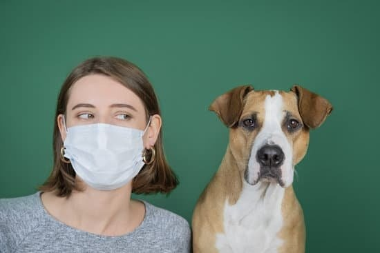 Dogs and Face Masks, what to do to help your dog in a world of masks.